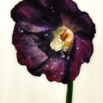 one black hollyhock, painting, white background, flower, still life