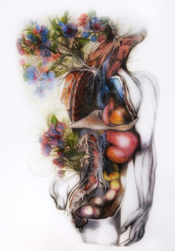 anatomical painting, dissected human, blue peony