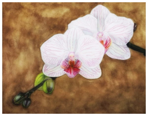 two white orchids, ochre background, watercolor painting, still life