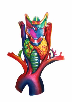 larynx, anatomical, colorful, painting, watercolor, polychromos, white background, colors red blue pink green