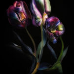 Three tulips, still life painting, black backround, colors purple blue green